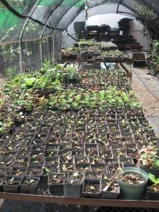 Las Plantitas en Macetas